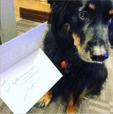 dog and bonus card