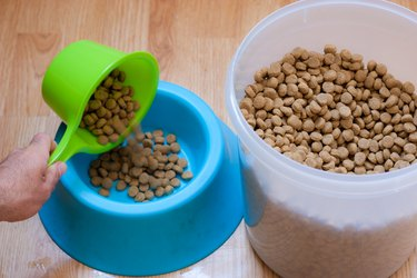 Hand pouring kibble into dog bowl