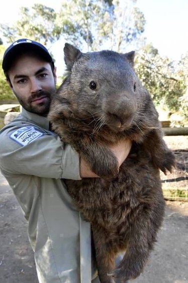 Animals Who Are Much Bigger Than They Think They Are