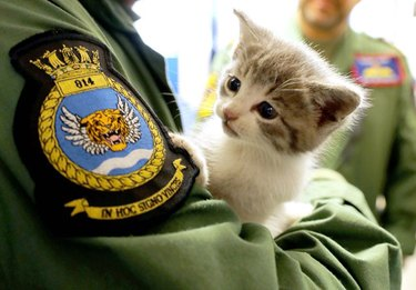 Kitten Poses With Hunky Sailors After Adorable Rescue