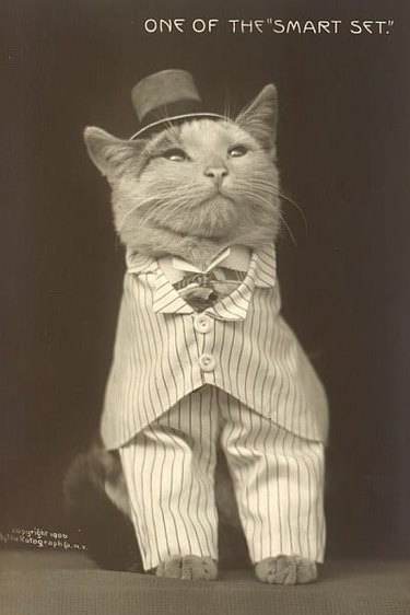Vintage picture of a cat dressed up in a suit