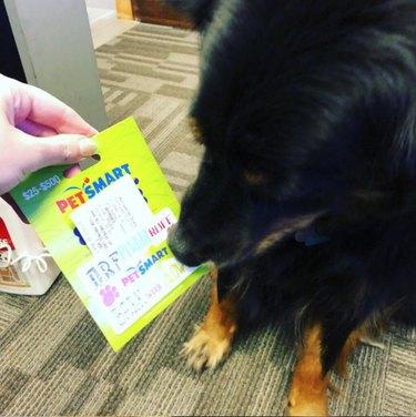 dog and petsmart gift card