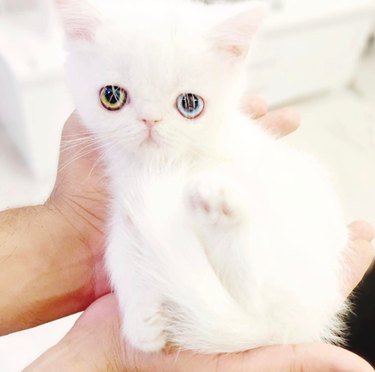Meet Missy Pam Pam, the tiny kitten with eyes from another planet