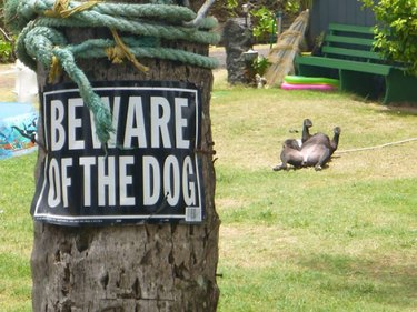 "Dog lies on back near ""beware of dog"" sign"