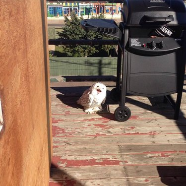 Owl next to outdoor grill.
