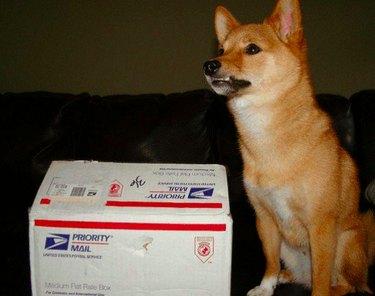 Postal Pets