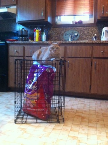 Cat sitting on crate, which contains a bag of the cat's food