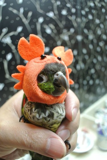 Bird with a crab mask