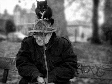 Cat on Man's Head