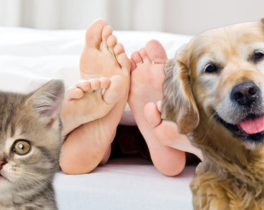 dog and cat with human feet in backcground