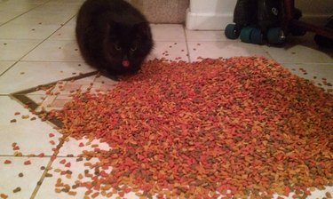 Cat eating cat food that spilled on the floor