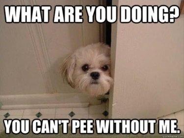 clingy dog