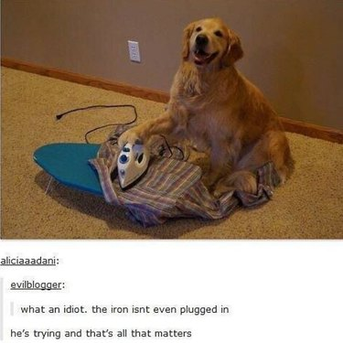 Dog with ironing board.