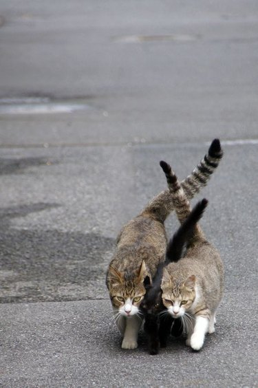 Stretched cat tails