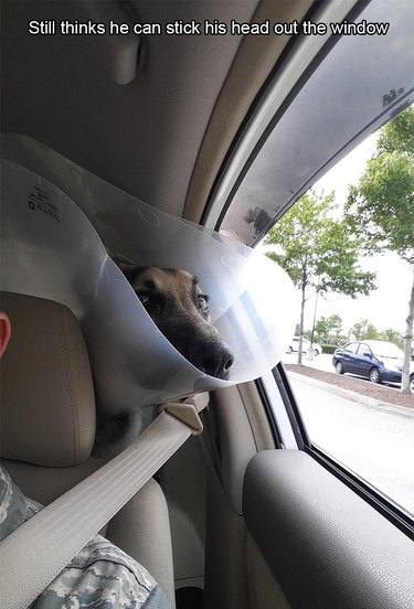 Dog wearing E-collar trying to stick its head out this window