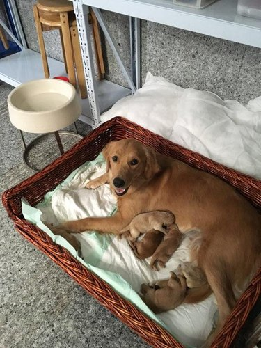 23 proud dog moms & dog dads posing for pictures with their puppies