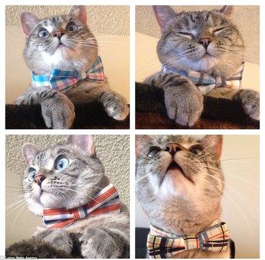 Cat personalities