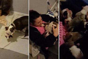 This New Dog Mom Proudly Shared Her Babies With Her Foster Mom