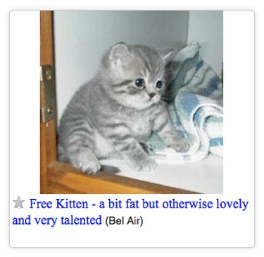 Craigslist ad for a fat kitten