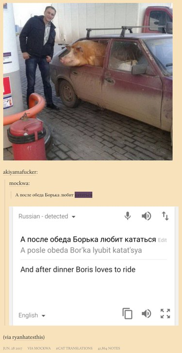 New Tumblr collects poorly translated cat captions from Russian