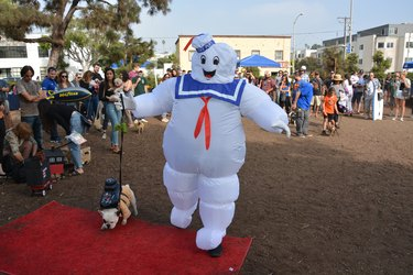 Costumed canines make the scene at Halloween pet parade