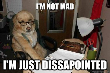 Dog wearing glasses looks disapproving.