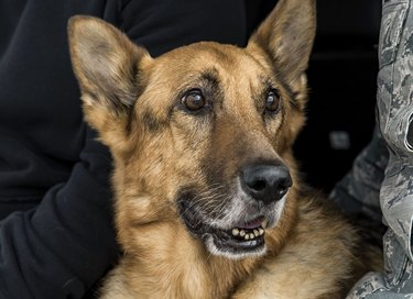 Air Force K-9 laid to rest and I'm crying here at my desk like a goddamn baby