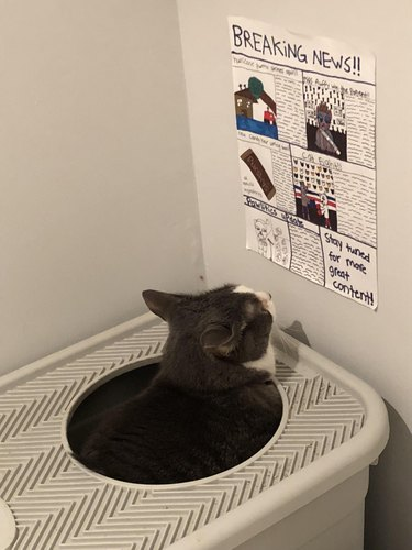 Cat Named Baba Caught Reading Mewspaper While Pooping