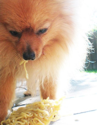 Fluffy dog with halo of light eating noodles.