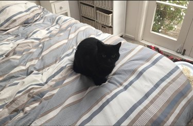 cat in bedroom
