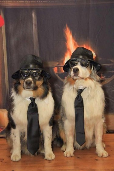 Two dogs in black fedoras, with sunglasses and black ties