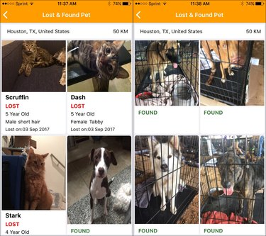 New app uses facial recognition software to reunite pets and humans separated by Hurricane Harvey
