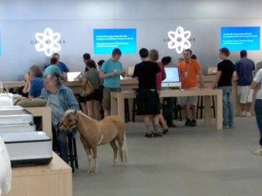 Donkey at Apple Genius Bar