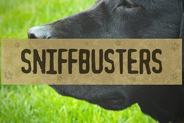 SNIFFBUSTERS: Can You Teach An Old Dog New Tricks?