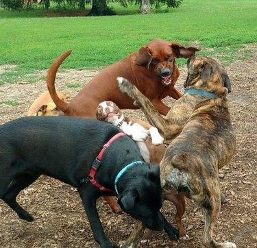 Dog park does pupper a bit of a frighten
