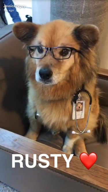 This Therapy Dog Wears Glasses and OMG
