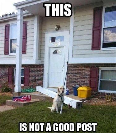 Dog broke a house