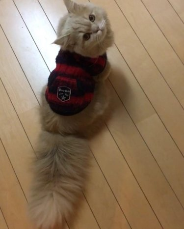 Bell showing off her tail in a red and black sweater