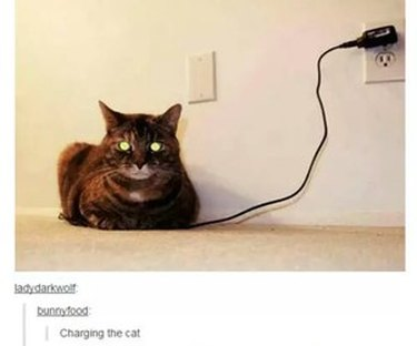 Cat sitting on phone
