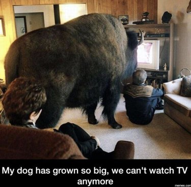 Animals Who Have No Idea How Big They Are