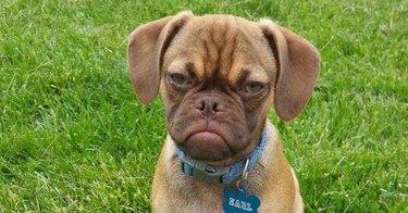 Annoyed Dog