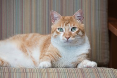 From Kitten to Cat: Tips for Helping Your Cat Transition Through Life