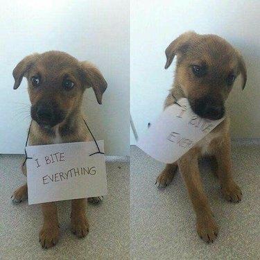 Dog bites everything -- including sign around neck