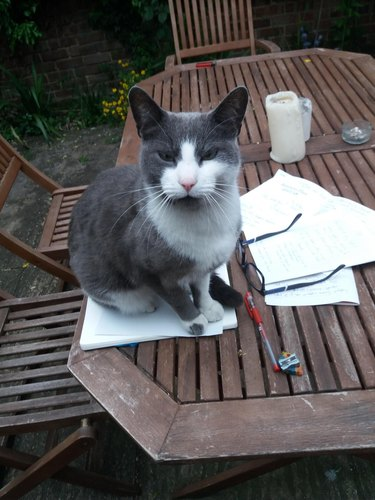 Stern-looking cat sitting on picnic table.
