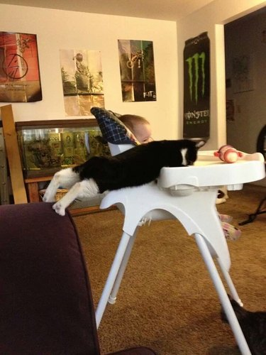Cat stretching to reach food on baby's highchair
