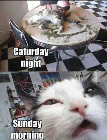 Caturday night