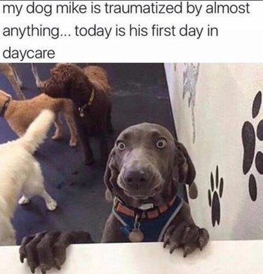 Dog looking anxious