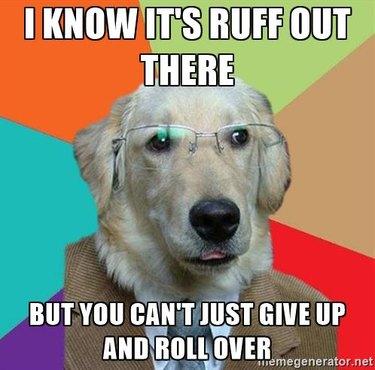 Business Dog meme