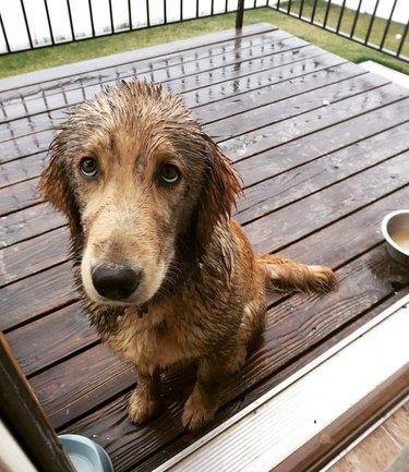 Muddy dog sitting outside.