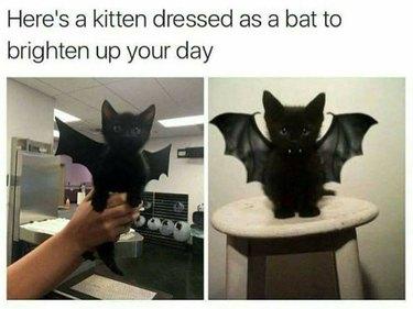 Kitten dressed up like a bat